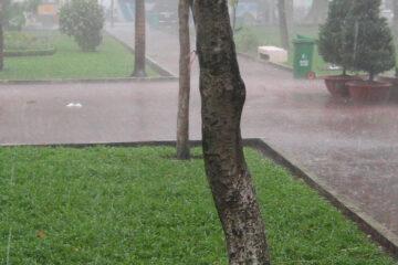 Ho Chi Minh City Park - Rain